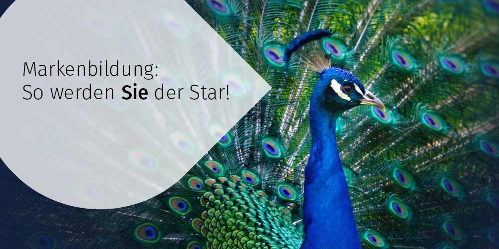 Markenbildung-So-werden-Sie-der-Star