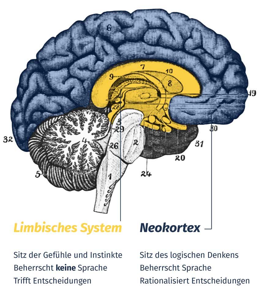 Gründer-Tipps: Neokortex und Limbisches System