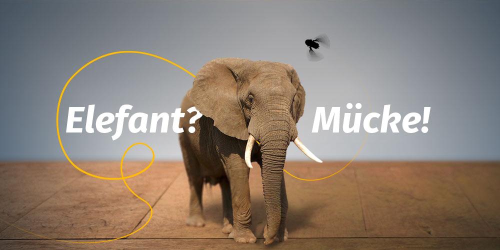 Einfach erklärt: Einen Elefanten zur Mücke machen